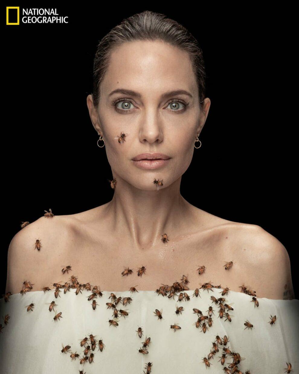 Angelina jolie on world bee day