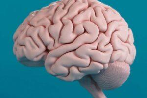 google mapping of human brain
